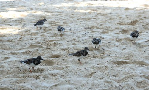 Birds found searching for food on the beach