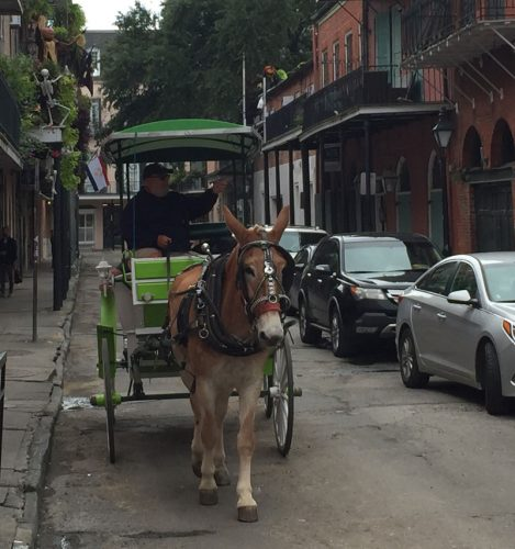 Horse and Carriage on the streets of mid-town New Orleans