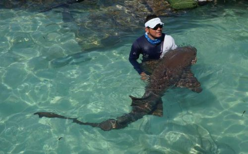 Nurse shark in captivity at Playa Lancheros