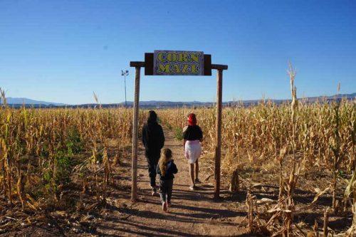 staheli-corn-maze