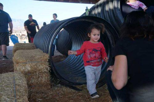 staheli-farm-playtime-2