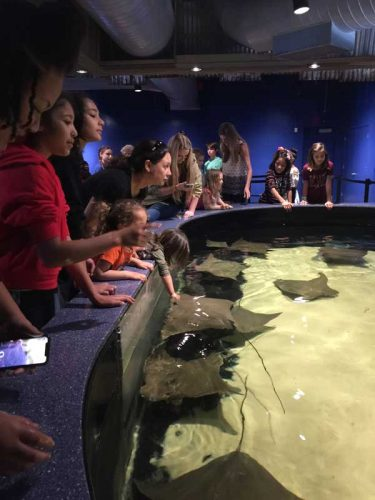 Stingrays - look at the little one stretching out to touch it