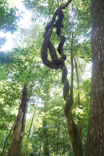 Palenque jungle walks