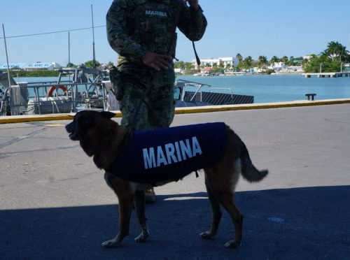 Border security with dogs checking the bags before boarding