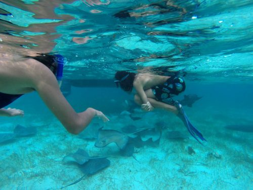 Sting Rays and Nurse Sharks