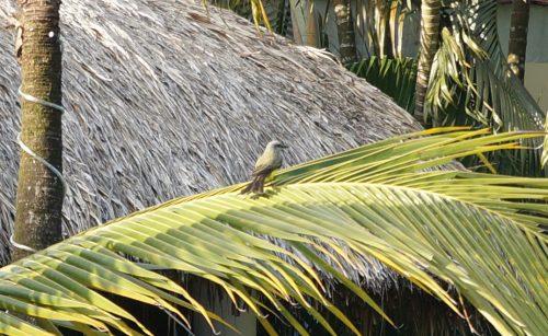 wildlife-bird