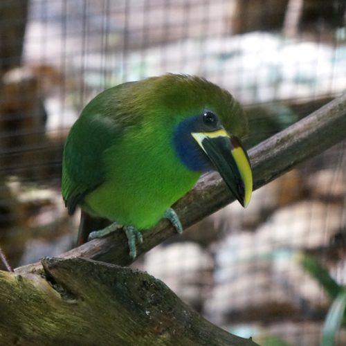A pretty green bird