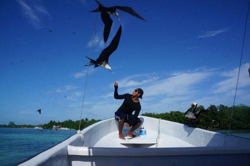 Feeding Frigates from the boat