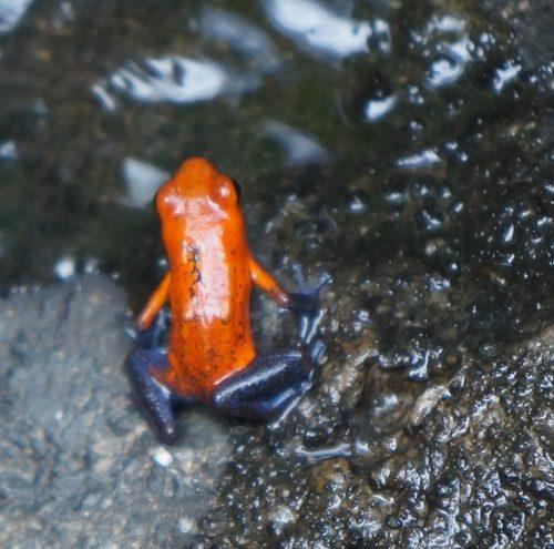 wildlife-frog1