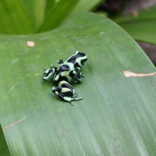 wildlife-frog2