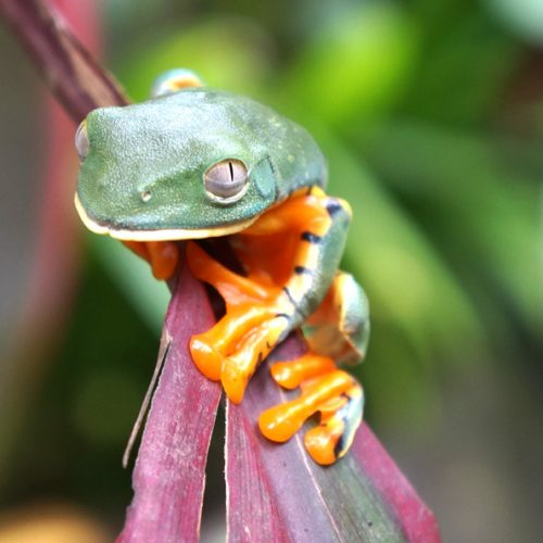 This frog changes colour when awake