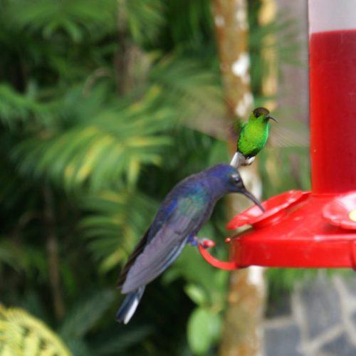 wildlife-hummingbird1