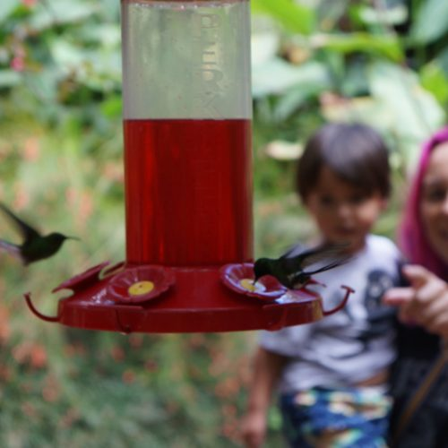 wildlife-hummingbird4