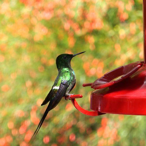 wildlife-hummingbird5