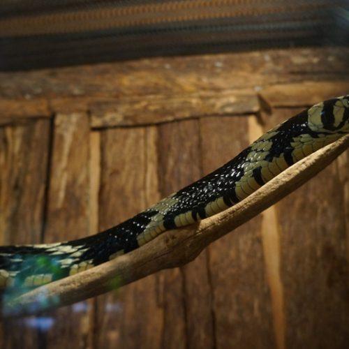 wildlife-snake1