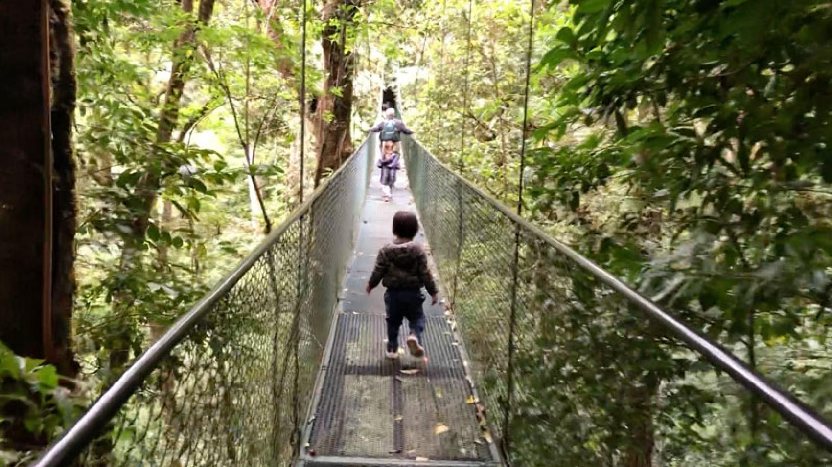 Hanging bridges forest walk