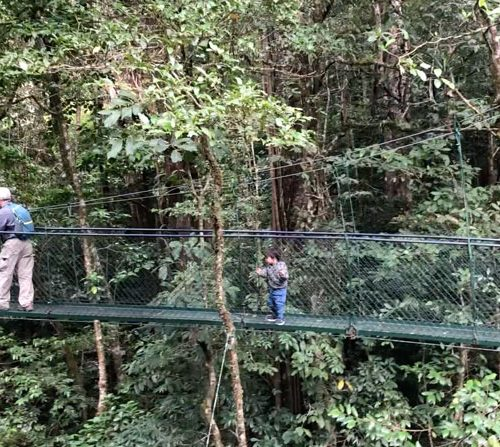 hanging-bridges-4