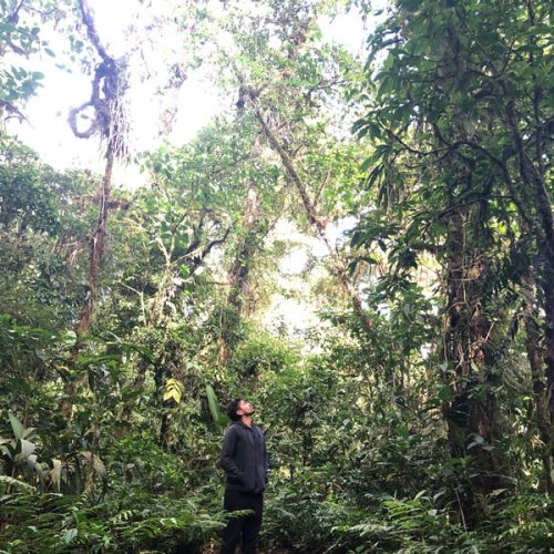 Santa Elena Cloud Forest Walk