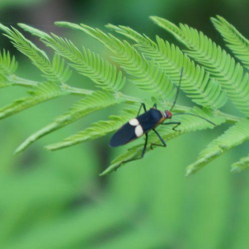 wildlife-bug2