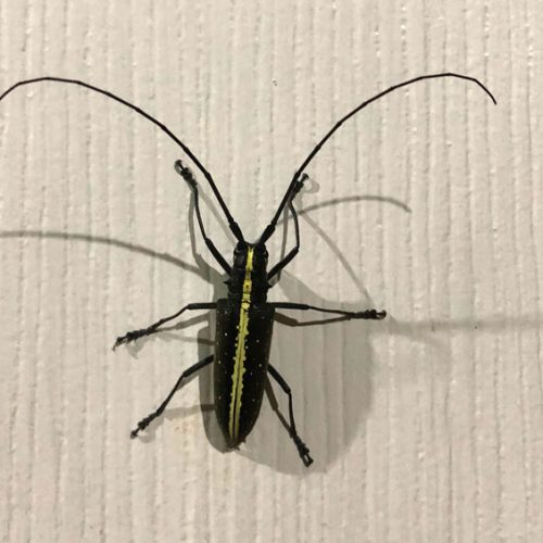 wildlife-insect