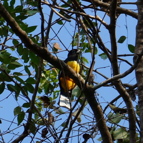 Colourful bird visiting the trees around our house