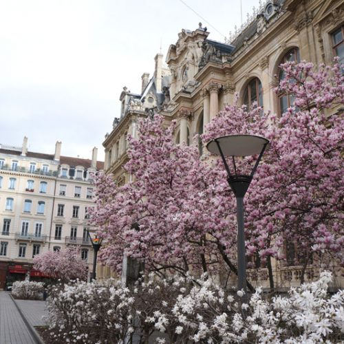 Beautiful trees were blossoming at the beginning of spring in the square outside Lyon Place Financière et Tertiaire
