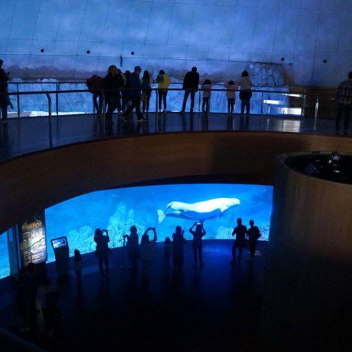 Valencia-oceanographic-7